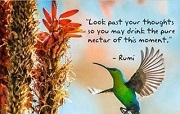 Look past your thoughts so you may drink the pure nectar of this moment