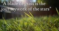 Walt Whitman Leaves Of Grass Quotes - Whitman Quotes
