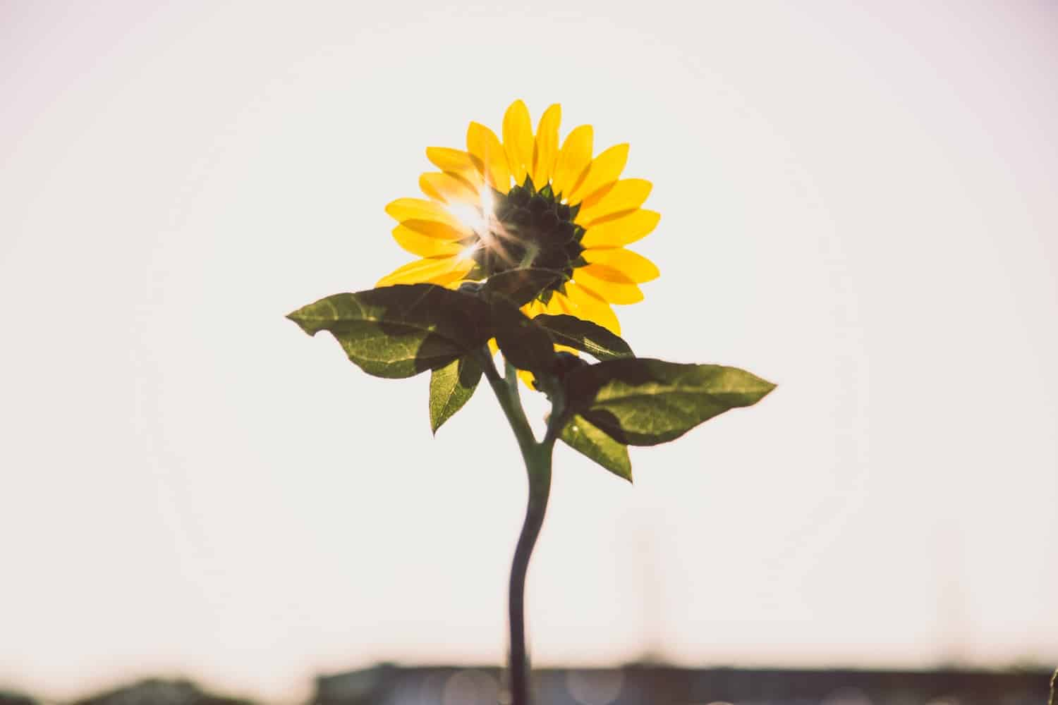 10 Short Positive Quotes Which Will Brighten Up Your Day